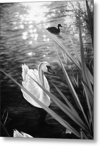 Swan 1 Metal Print