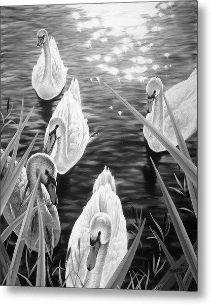 Swan 2 Metal Print