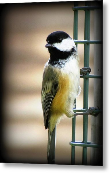Sweet Little Chickadee Metal Print by Lisa Jayne Konopka