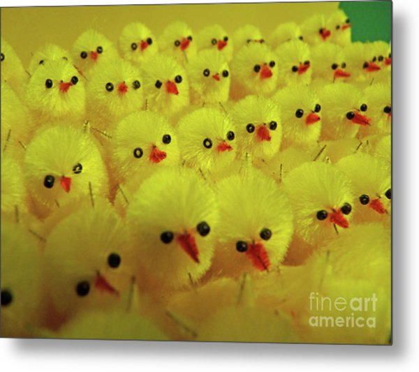 Sweet Little Chicks Waiting For Easter Metal Print