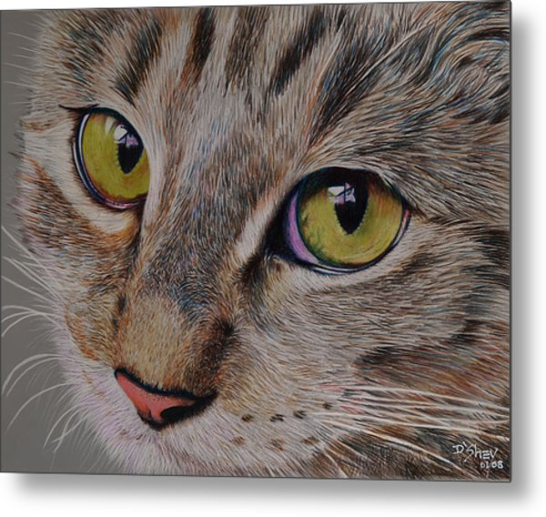 Tabby Stare Metal Print by Don MacCarthy