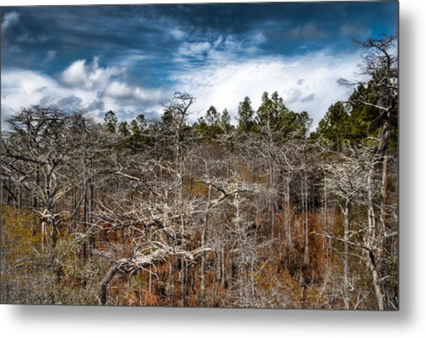 Tate's Hell State Forest Metal Print by Rich Leighton