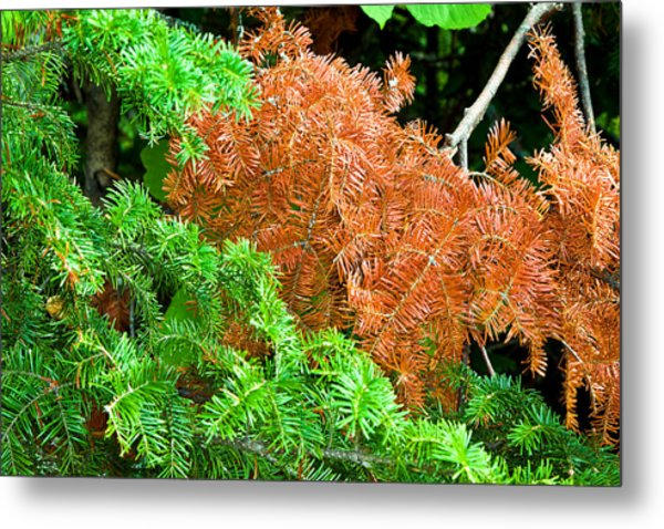 Textures Of A Tree Metal Print by Gary Smith