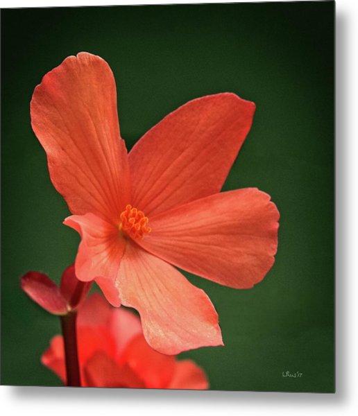 That Orange Flower Metal Print