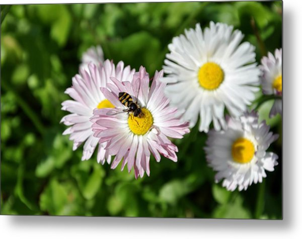 The Beauty Of Nature Metal Print by Luiza W