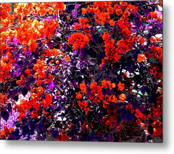 The Bougainvillea Poster Metal Print by Juana Maria Garcia-Domenech