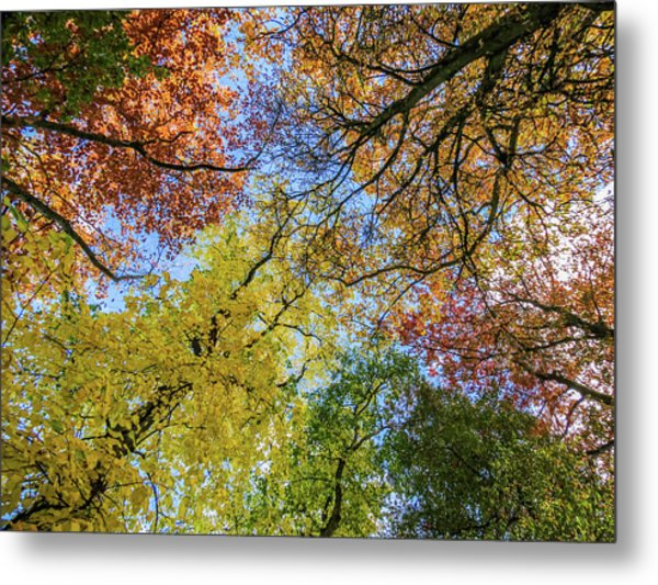 The Colors Of Autumn Metal Print