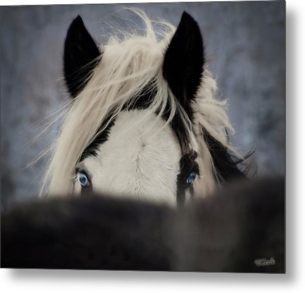 The Eyes Have It Metal Print by Elizabeth Sescilla