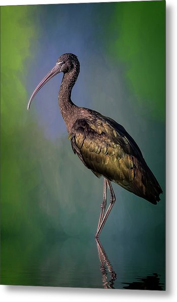 The Glossy Ibis Stroll Metal Print