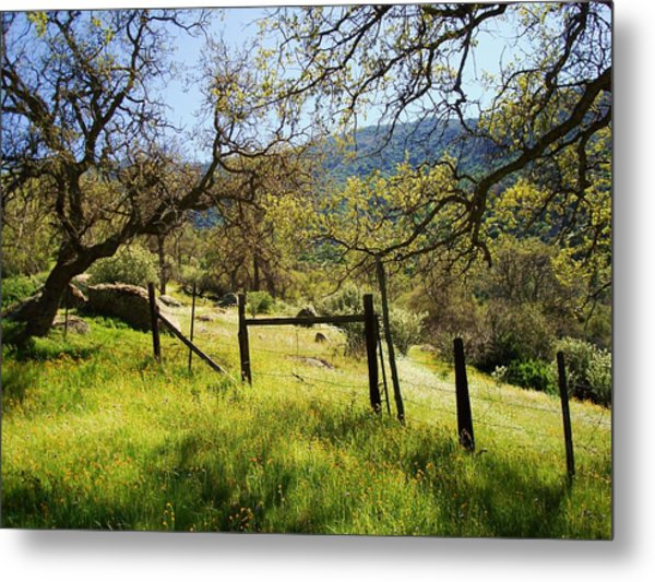 The Grass Is Always Greener Metal Print by Steve Ponting