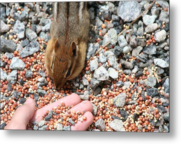 The Hand Out Metal Print by Randy Morehouse