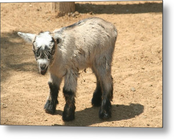 The Kid Metal Print by Amy Holmes