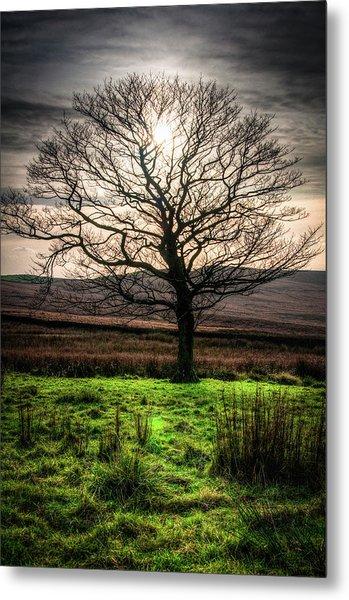 The One Tree Metal Print