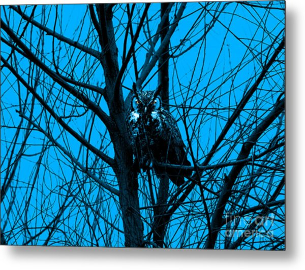 The Owl . Blue Metal Print by Wingsdomain Art and Photography
