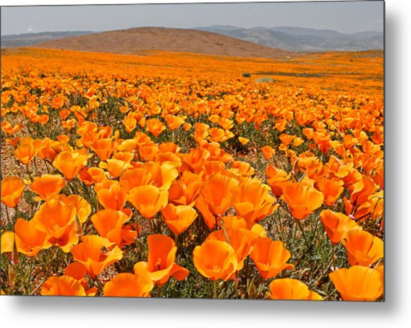 The Poppy Fields - Antelope Valley Metal Print