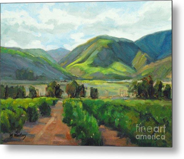 The Scent Of Citrus - Santa Paula Citrus Grove Central Coast Landscape Metal Print by Karen Winters