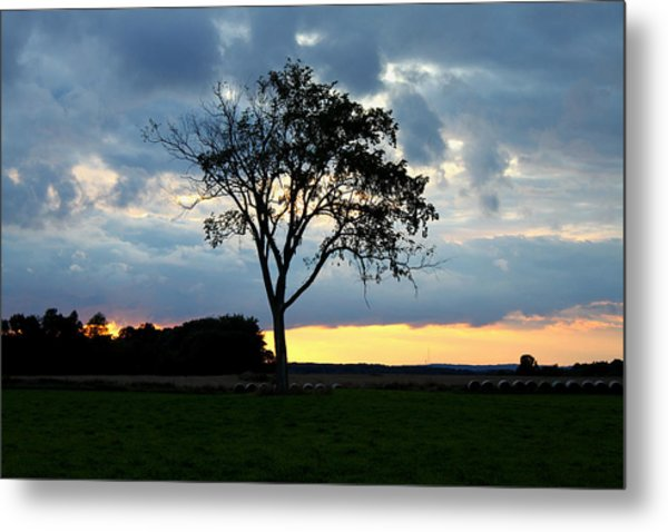 The Tree Of Life Metal Print by Mark  France
