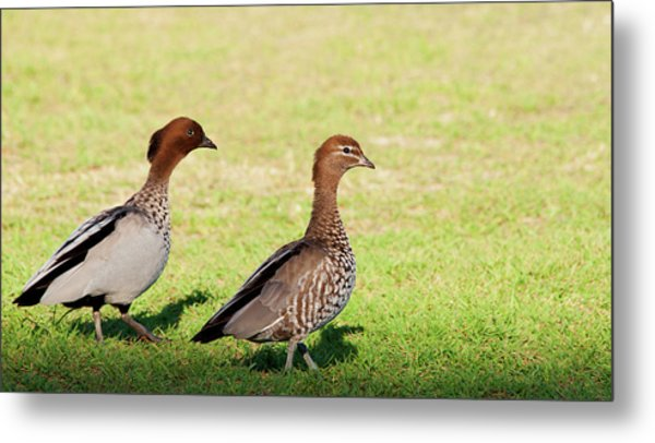 The Two Of Us Metal Print by Heather Thorning