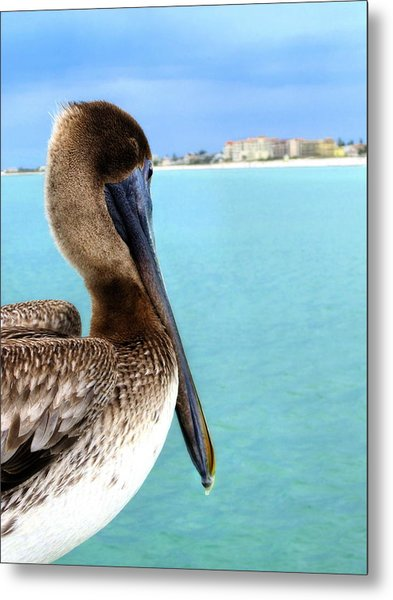 This Is My Town - Pelican At Clearwater Beach Florida  Metal Print