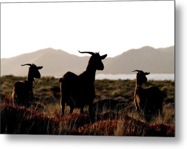Three Goats Metal Print