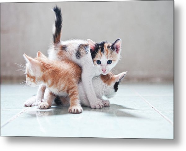 Three Kittens Metal Print
