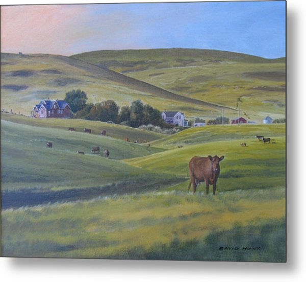 Till The Cows Come Home Metal Print by David Hunt