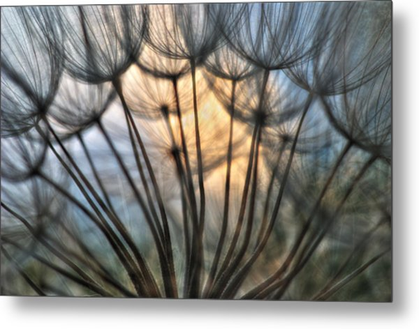 Touch Of Light Metal Print by Iris Greenwell