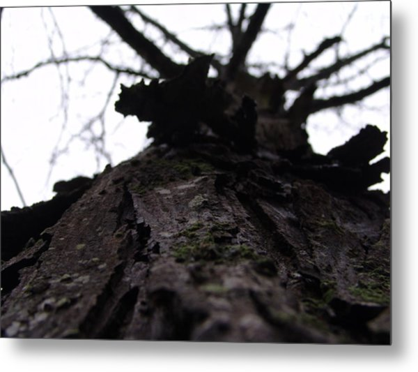 Tree 004 Metal Print by Ryan Vaal