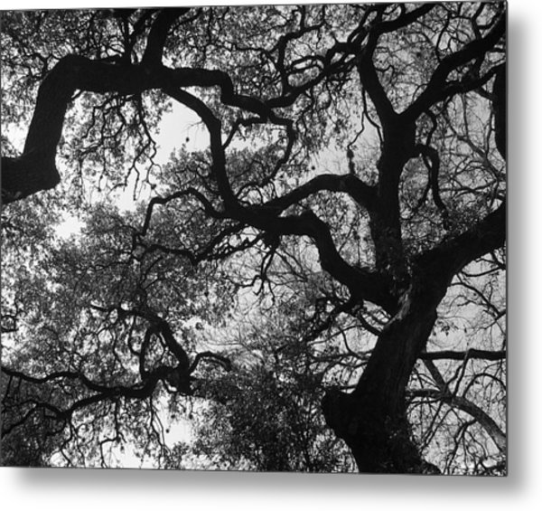 Tree Gazing Metal Print by Lindsey Orlando