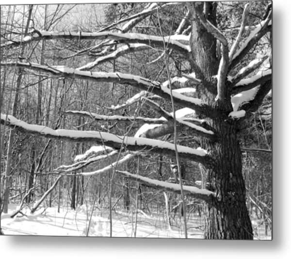 Tree In The Forest Metal Print by Douglas Pike