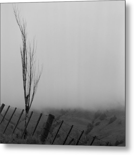 Tree Near Whangarei New Zealand Metal Print by Werner Hammerstingl