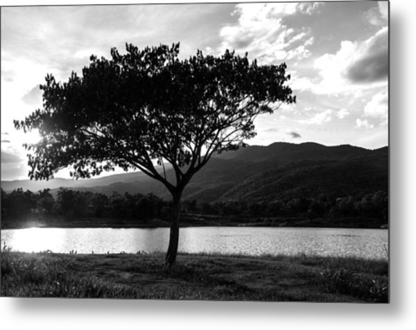 Tree Silhouette Black And White Landscape Photograph By
