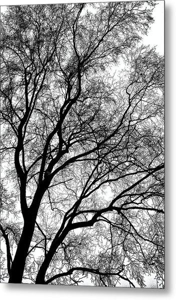 Tree Silhouette Series 1 Metal Print