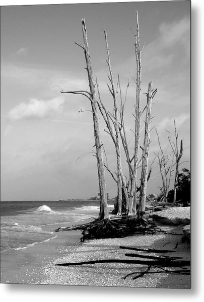 Trees On The Beach Black And White Metal Print by Rosalie Scanlon