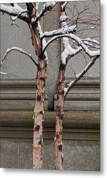 Trees Wall And Snow Metal Print