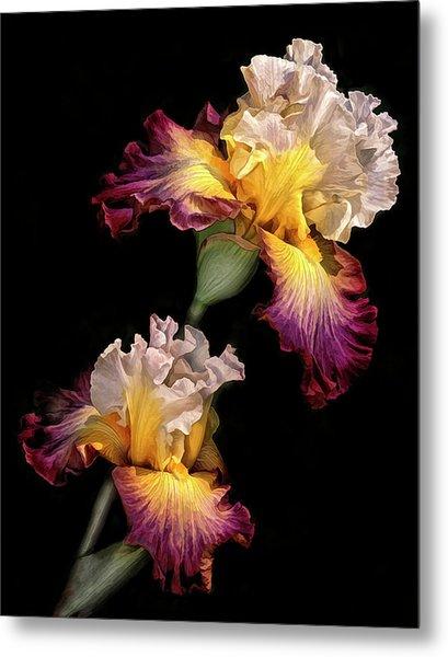 Tricolor Iris Pair Metal Print