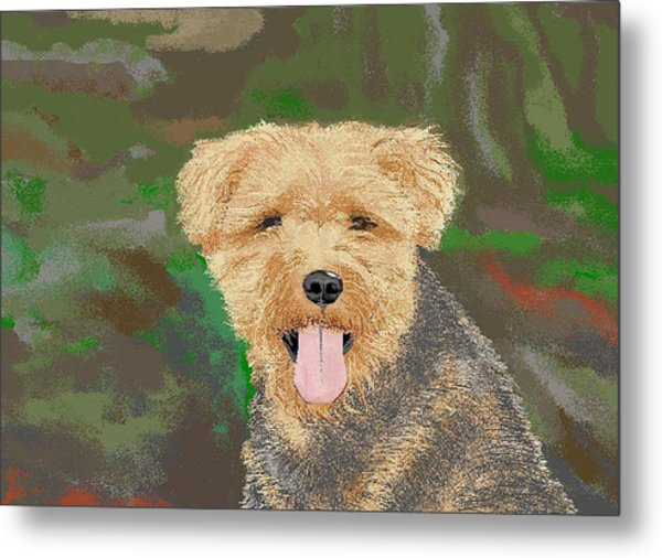 Tucker The Welsh Terror Metal Print by Carole Boyd