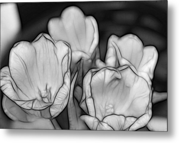 Tulip Line Study Metal Print by Kevin  Sherf
