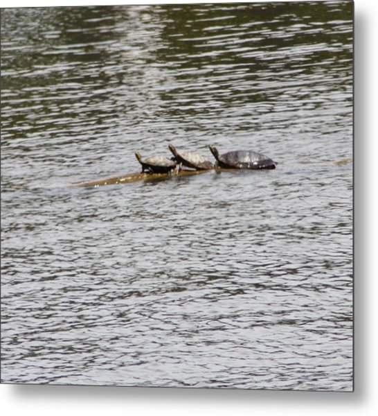 Turtles Metal Print by Christy Bearden