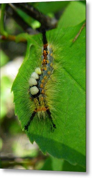 Tussock Moth Mohawk Metal Print