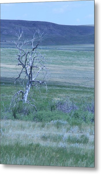 Twisted And Free Metal Print