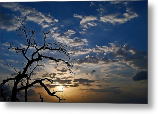 Twisted Sunset Metal Print by Karl Manteuffel