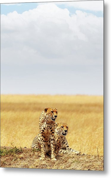 Two Cheetahs In Africa - Vertical With Copy Space Metal Print