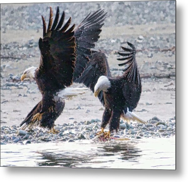 Two Eagles Metal Print by Clarence Alford