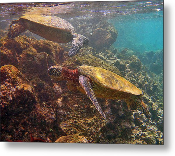 Two Honu On The Reef Metal Print