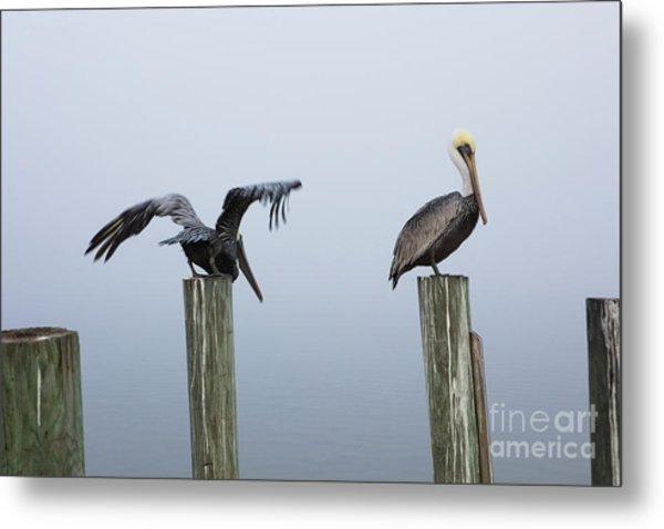 Two Pelicans Metal Print