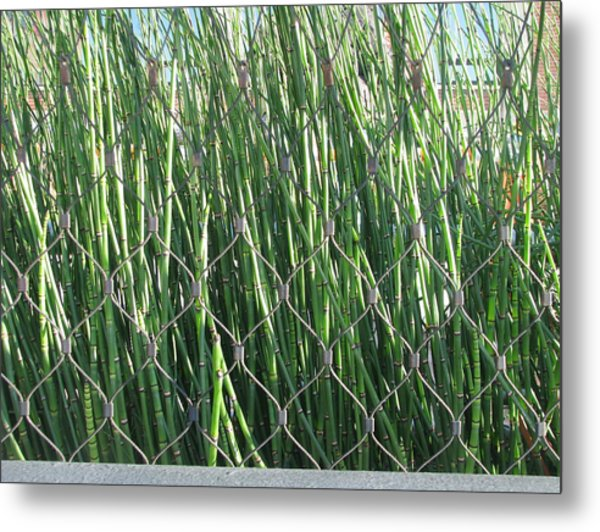 Urban Jungle Metal Print by Hasani Blue