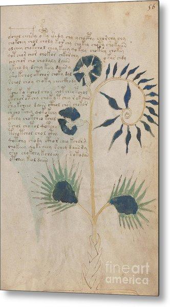 Voynich Flora 12 Metal Print