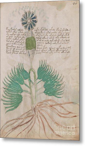 Voynich Flora 16 Metal Print