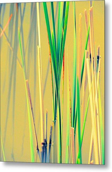 Water Reeds Soft Metal Print